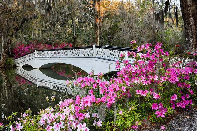 Touring The Gardens At Magnolia Plantation Things To Do In Charleston Sc Visitor Info