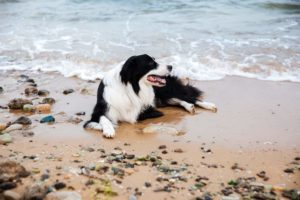 Pet Friendly Places In Charleston Sc