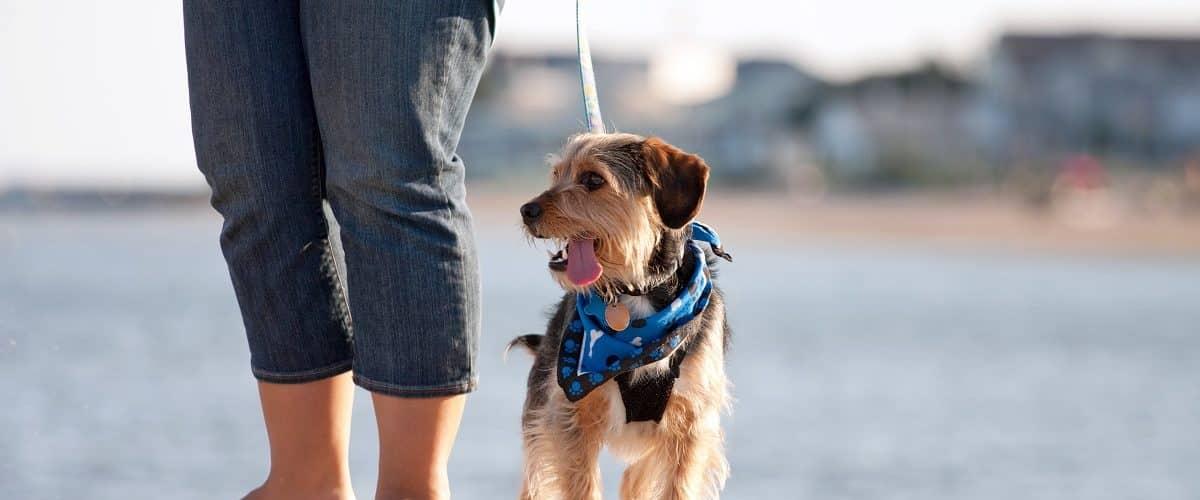 dog-friendly spots in Charleston, SC